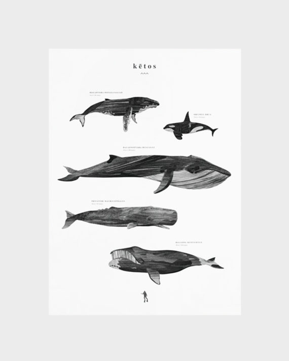 Coco Lapine Design Ketos Whale Poster Valas Juliste