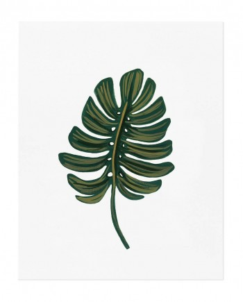 apm105-monstera-leaf-02
