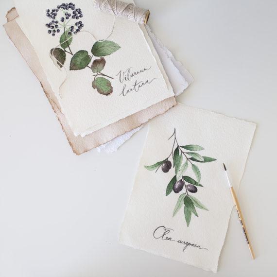 botanical watercolor workshop